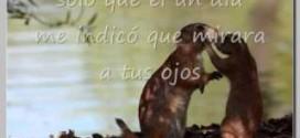 Ricardo Montaner No Me Puedo Aguantar